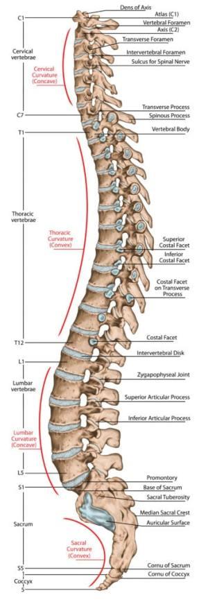 Nackspärr: Ofta led i nacken eller bröstrygg/ revben som ligger bakom