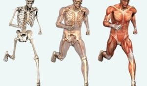 human-skeletal-system-free-picture-720x420